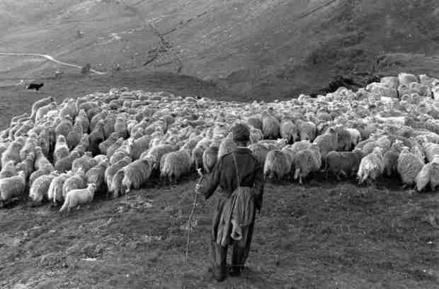 Pastore gallese negli anni 50. Più pecore che abitanti: il Galles è la Nuova Zelanda d'Europa. Nelle terre dei Medici di Myddfai